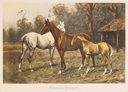 Engraving, Hand coloured restrike engraving, A Promising Youngster