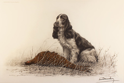 Engraving, Hand coloured restrike engraving, Cocker Spaniel and Pheasant Hen