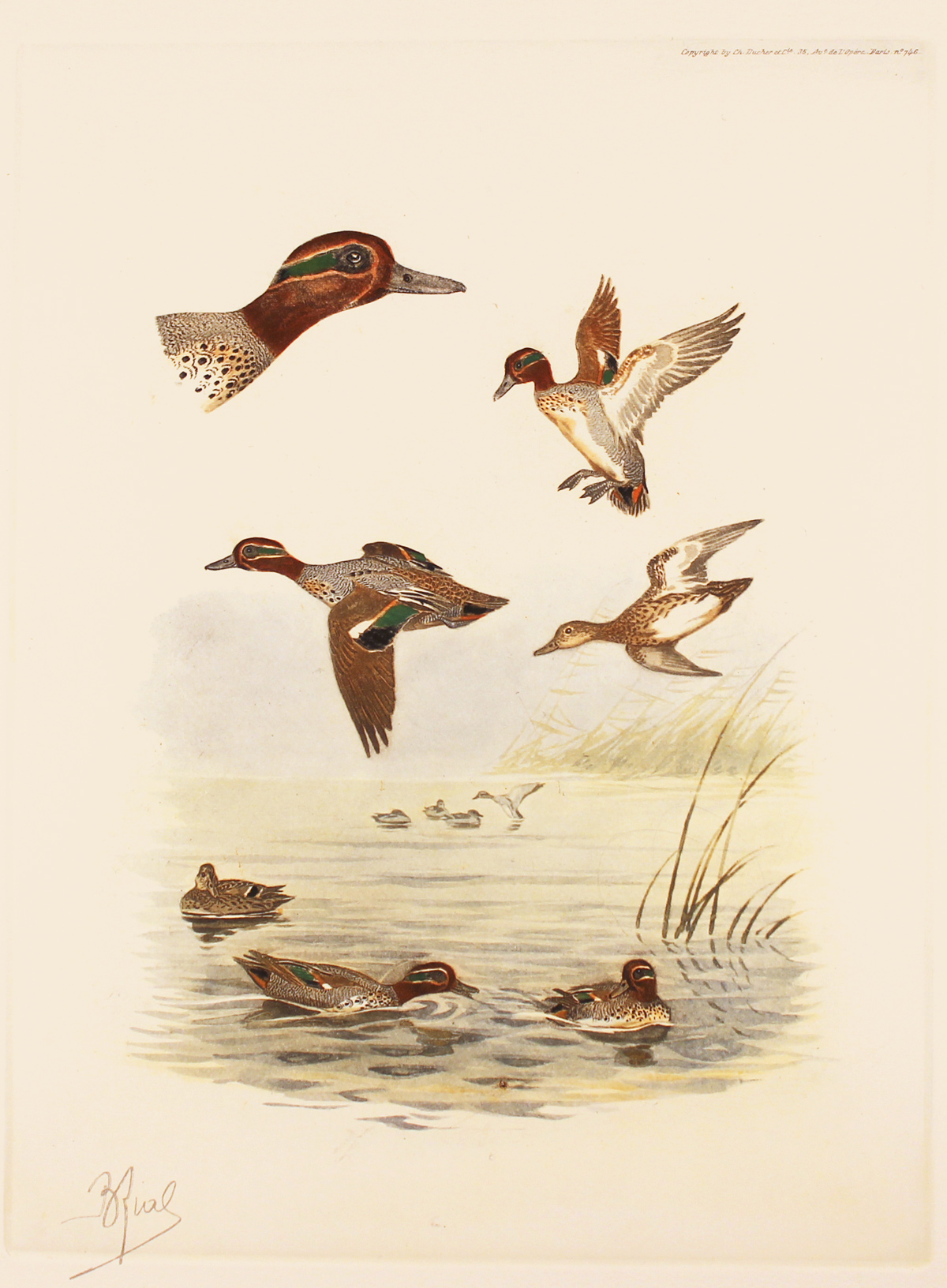 Engraving, Hand coloured restrike engraving, Teals Click to enlarge