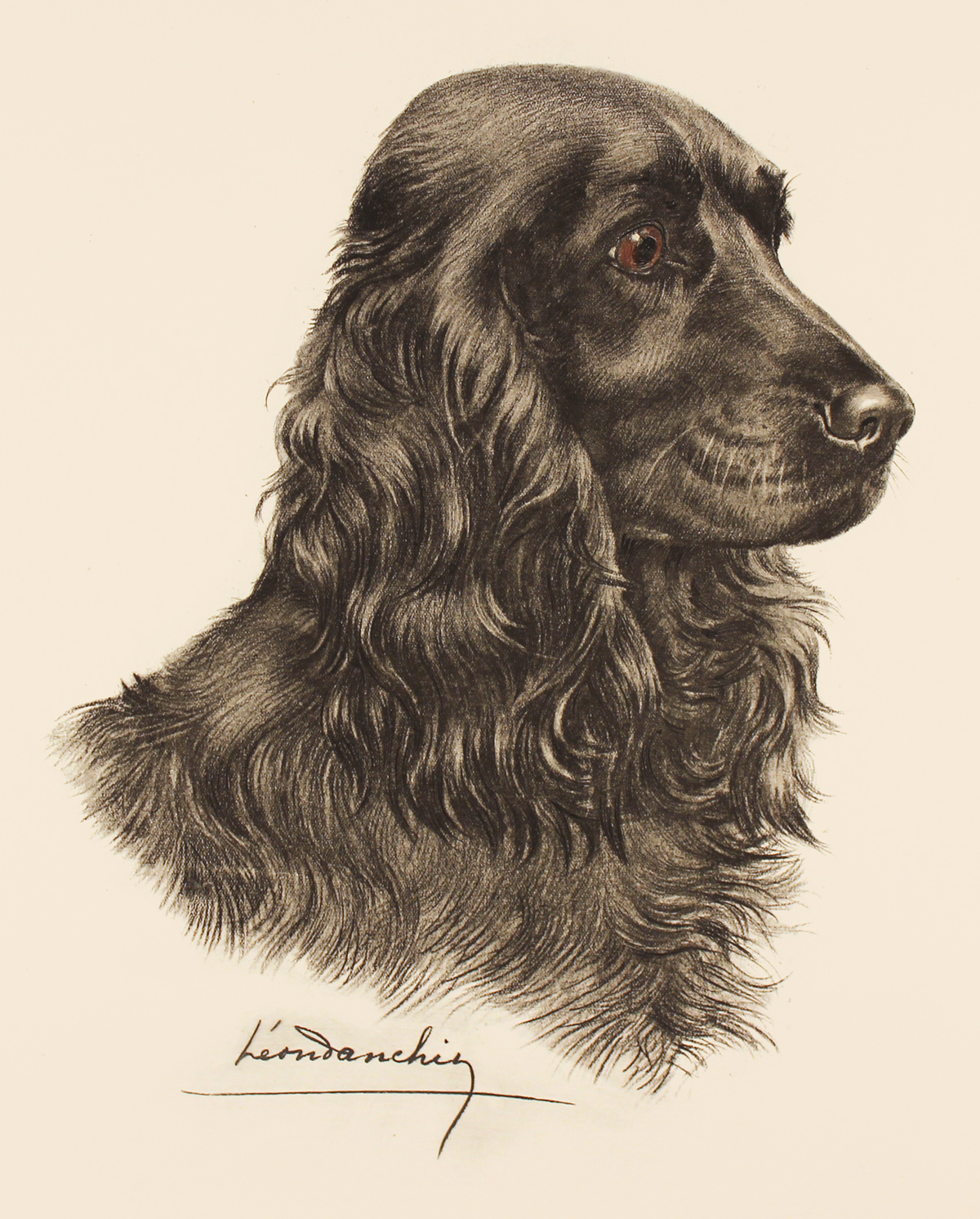 Engraving, Hand coloured restrike engraving, Black Cocker Spaniel  Click to enlarge