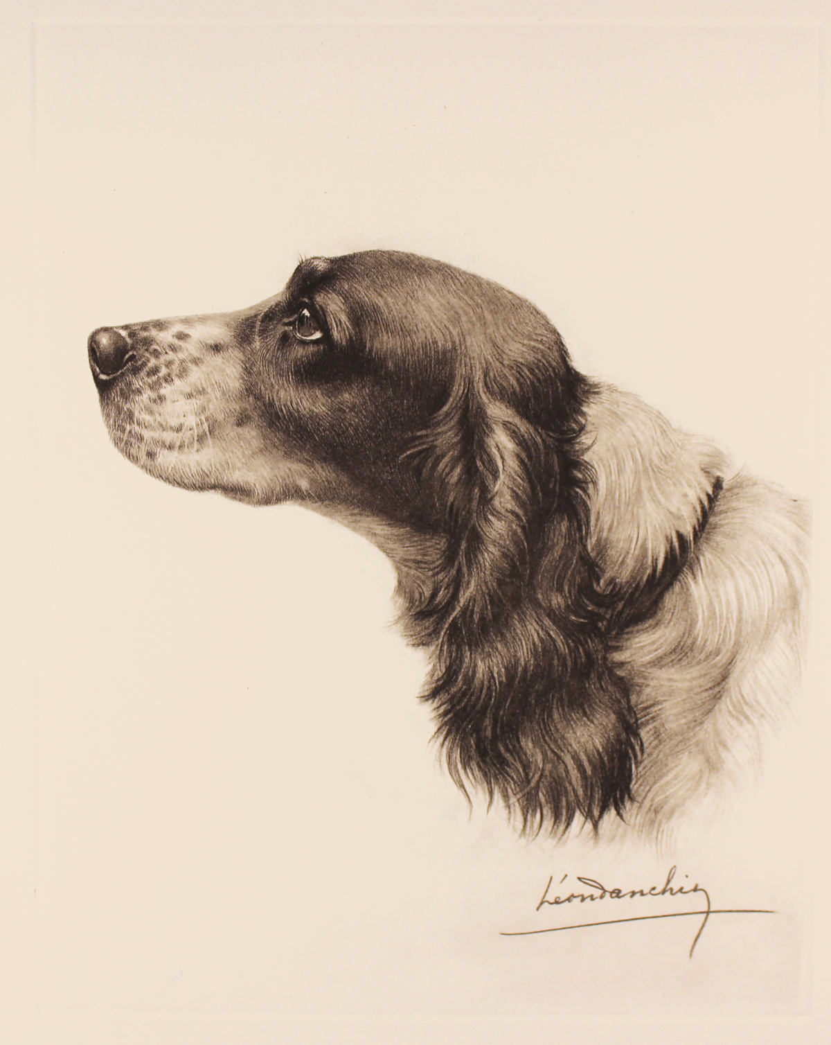 Engraving, Hand coloured restrike engraving, Black and White Cocker Spaniel Click to enlarge
