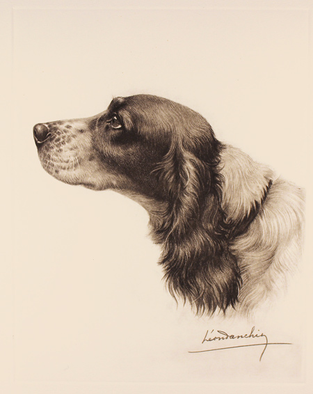 Engraving, Hand coloured restrike engraving, Black and White Cocker Spaniel No frame image. Click to enlarge