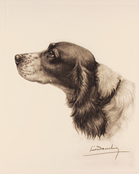 Engraving, Hand coloured restrike engraving, Black and White Cocker Spaniel