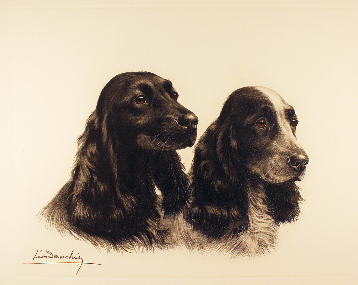 Engraving, Hand coloured restrike engraving, Two Cocker Spaniels Click to enlarge