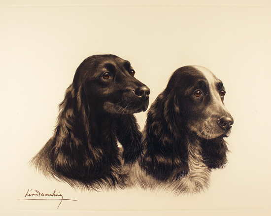 Engraving, Hand coloured restrike engraving, Two Cocker Spaniels No frame image. Click to enlarge