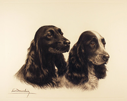 Engraving, Hand coloured restrike engraving, Two Cocker Spaniels