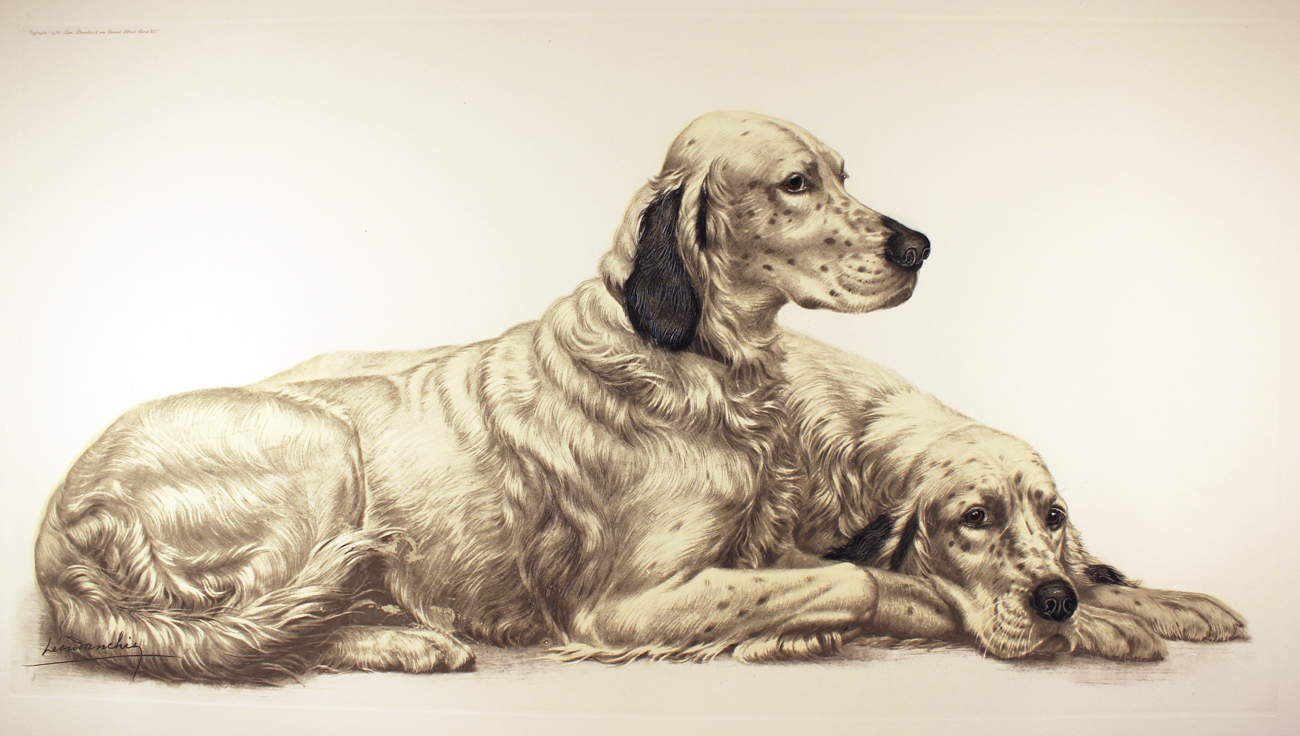 Engraving, Hand coloured restrike engraving, English Setters at Rest Click to enlarge