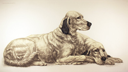 Engraving, Hand coloured restrike engraving, English Setters at Rest