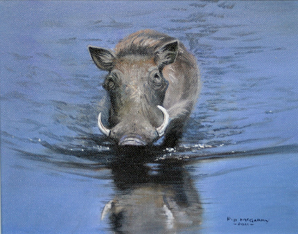 Pip McGarry, Original oil painting on canvas, Warthog Wading