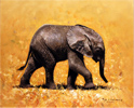 Pip McGarry, Original oil painting on canvas, Baby Elephant, Kenya