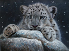 Pip McGarry, Original oil painting on canvas, Young Snow Leopard