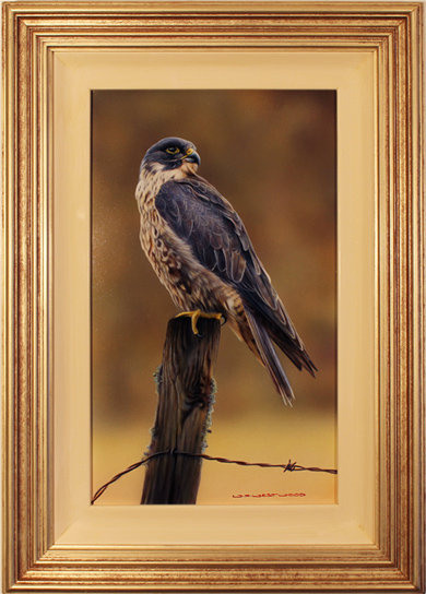Wayne Westwood, Original oil painting on panel, Falcon