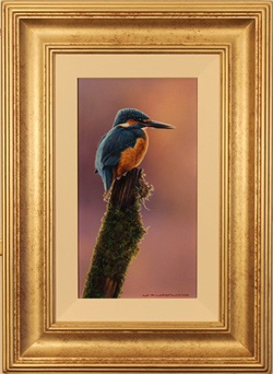 Wayne Westwood, Original oil painting on panel, Kingfisher