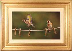 Wayne Westwood, Original oil painting on panel, Goldfinches on a Clothes Line