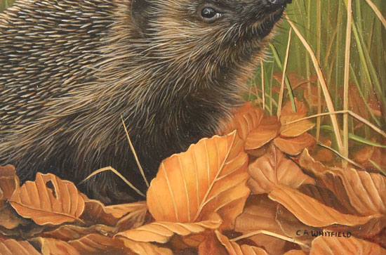 Carl Whitfield, Original oil painting on panel, Hedgehog Signature image. Click to enlarge
