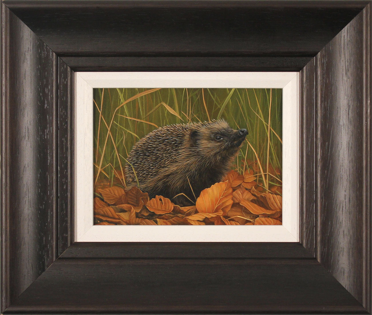 Carl Whitfield, Original oil painting on panel, Hedgehog Click to enlarge