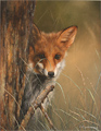 Carl Whitfield, Original oil painting on panel, Fox in the Grass