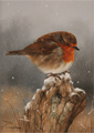 Carl Whitfield, Original oil painting on panel, Robin