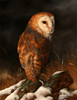 Carl Whitfield, Original oil painting on panel, Barn Owl