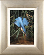 Carl Whitfield, Original oil painting on panel, Kingfisher in Flight