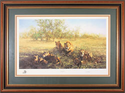 David Shepherd, Signed limited edition print, First Light at Savuti Medium image. Click to enlarge
