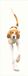 Mary Ann Rogers, Signed limited edition print, Fox Hound 1