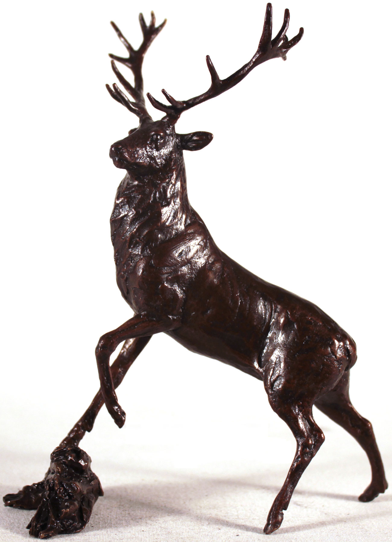 Michael Simpson, Bronze, Highland Stag Click to enlarge