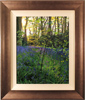 Michael James Smith, Original oil painting on canvas, Bluebells in Little Baddow, Essex