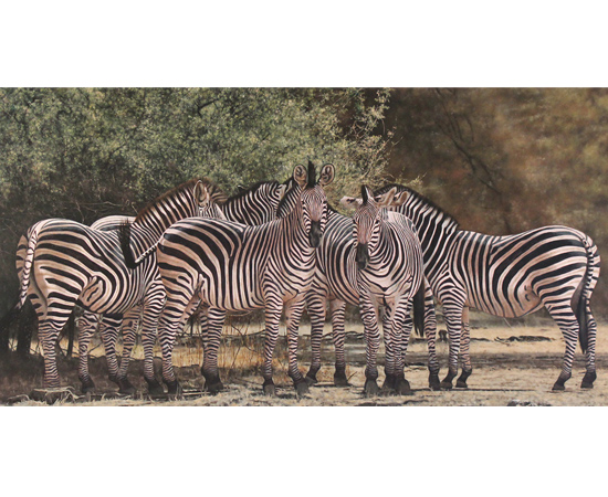 Stephen Park, Zebras of the Serengeti , Original oil painting on panel