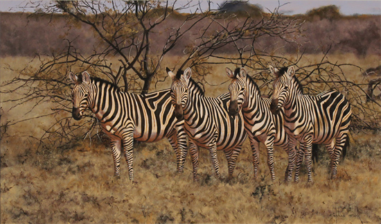 Stephen Park, Original oil painting on panel, Zebra