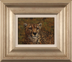 Stephen Park, Original oil painting on panel, Cheetah