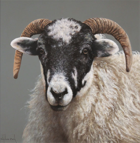 Stephen Park, Original oil painting on panel, Ewe No frame image. Click to enlarge