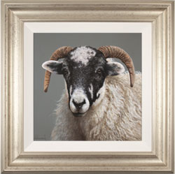 Stephen Park, Original oil painting on panel, Ewe Medium image. Click to enlarge