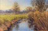 Stephen Hawkins, Original oil painting on canvas, Middleton Pastures