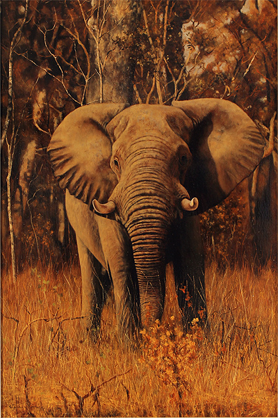Stephen Park, Original oil painting on panel, Elephant No frame image. Click to enlarge