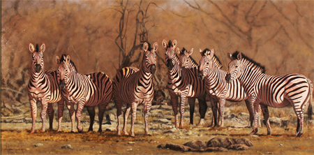 Stephen Park, Original oil painting on panel, Serengeti Zebras No frame image. Click to enlarge