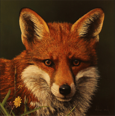 Stephen Park, Original oil painting on panel, Fox No frame image. Click to enlarge