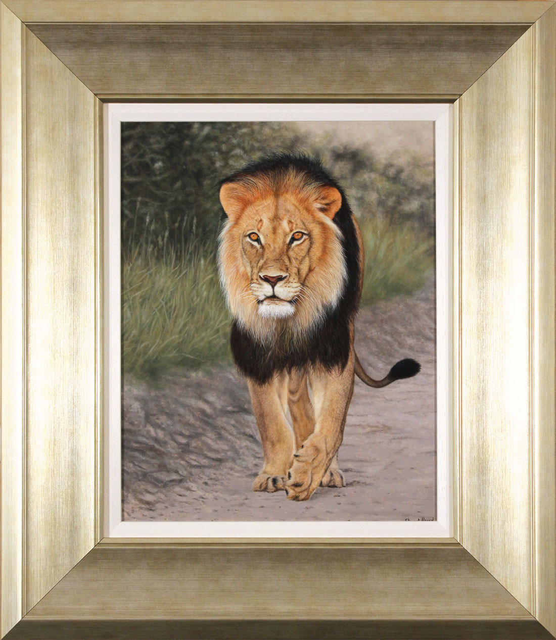 Stuart Herod, Original oil painting on panel, Lion Click to enlarge