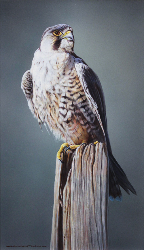 Wayne Westwood, Signed limited edition print, Peregrine Falcon