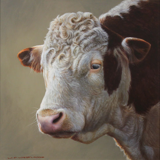 Wayne Westwood, Original oil painting on panel, Hereford Bull No frame image. Click to enlarge