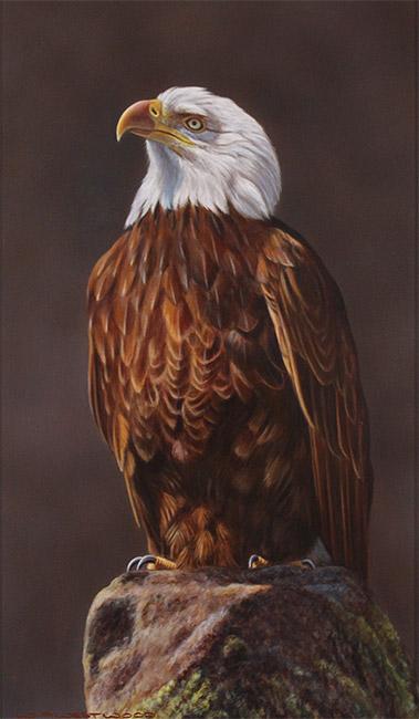 Wayne Westwood, Original oil painting on panel, American Bald Eagle  No frame image. Click to enlarge