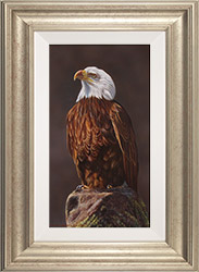 Wayne Westwood, Original oil painting on panel, American Bald Eagle  Medium image. Click to enlarge