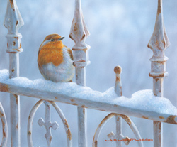 Wayne Westwood, Winter Robin, Signed limited edition print