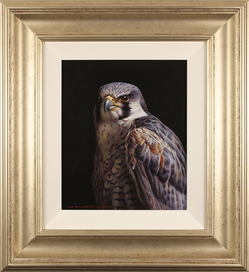 Wayne Westwood, Original oil painting on panel, Peregrine Falcon